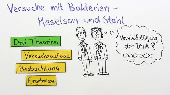 Meselson und Stahl – Replikation der DNA