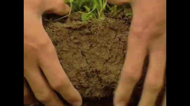 Lebensraum Boden