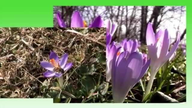 Die Jahreszeiten: Der Frühling