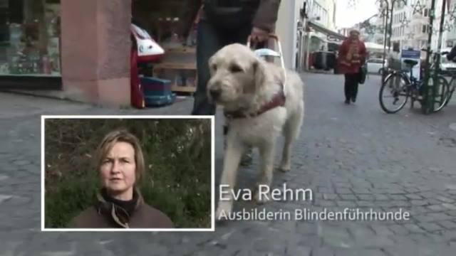 Hunde bei der Arbeit - Blinden- und Polizeihunde