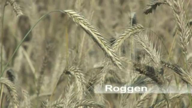 Getreideaufbau und -arten