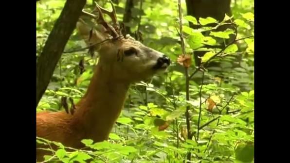 Der Wald - Aufbau und Bedeutung