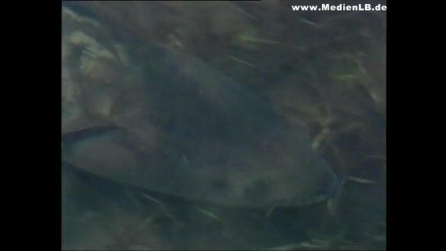 Faszination Fluss: Fische