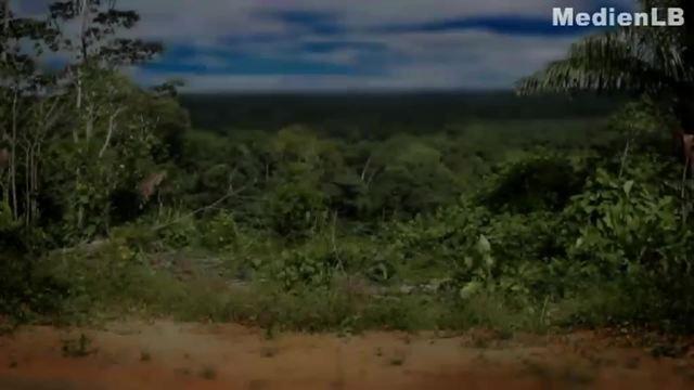 Menschenaffen - Schimpansen
