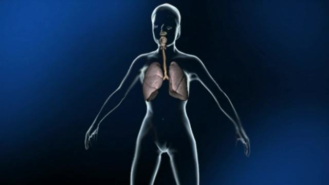 Mein Körper - wichtige Organe