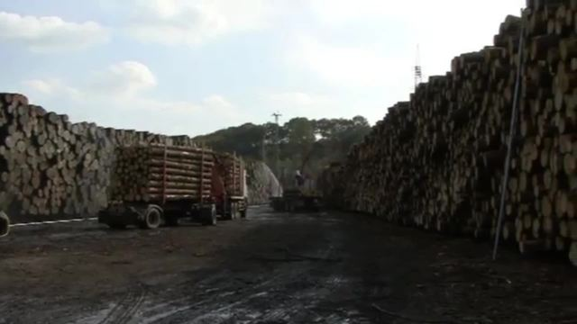Holz - Verarbeitung