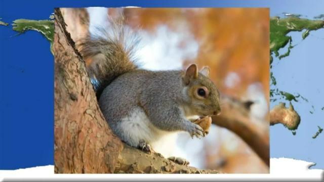 Das Eichhörnchen - Die verschiedenen Arten