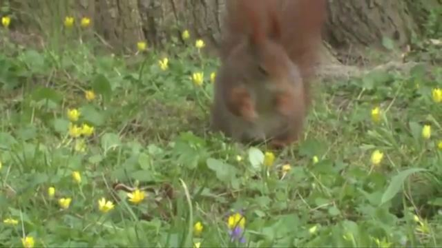 Das Eichhörnchen - Nahrung