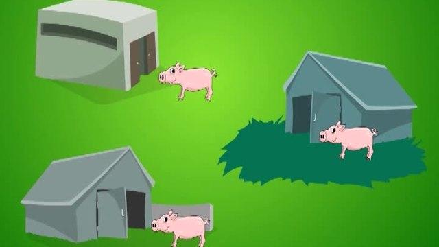 Wie leben Schweine?