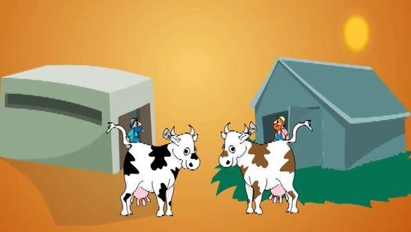 Wie leben Rinder?
