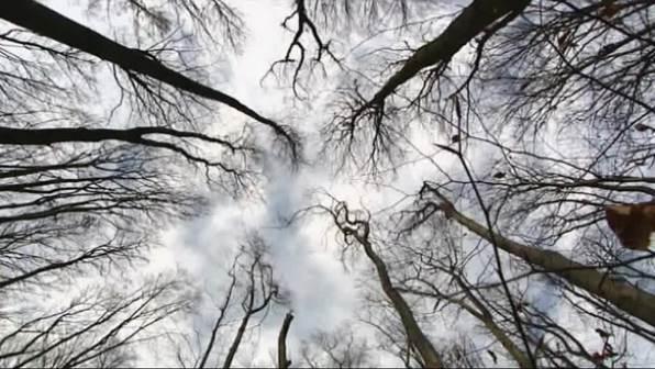Wie entstehen Windböen?