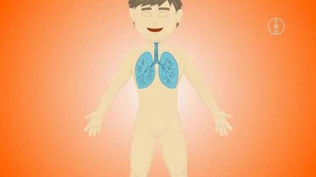 Mein Körper –  Atmung und Sauerstoffkreislauf