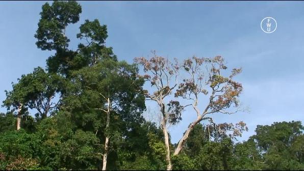 Der Regenwald Ghanas