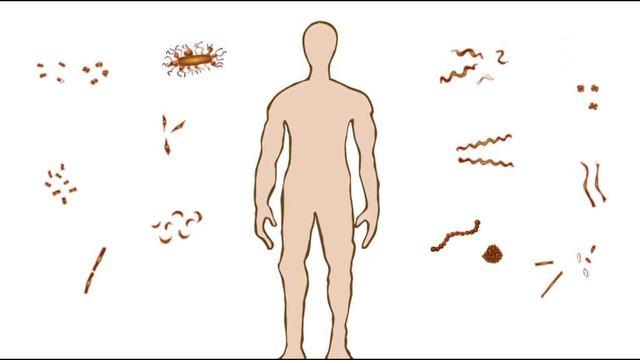 Bakterien und der Mensch – Biologie online lernen