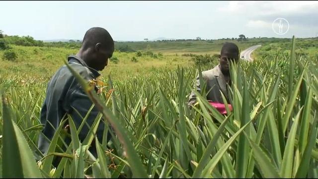 Afrikas landwirtschaftliche Exportprodukte