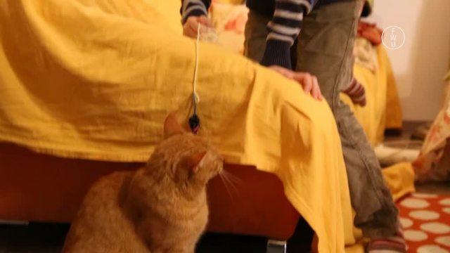 Mein Haustier und ich – Wie kümmere ich mich um eine Katze?