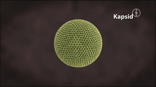 Viren: Wie sind Viren aufgebaut – Biologie online lernen