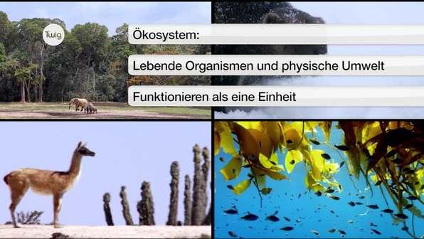 Was ist ein Ökosystem?