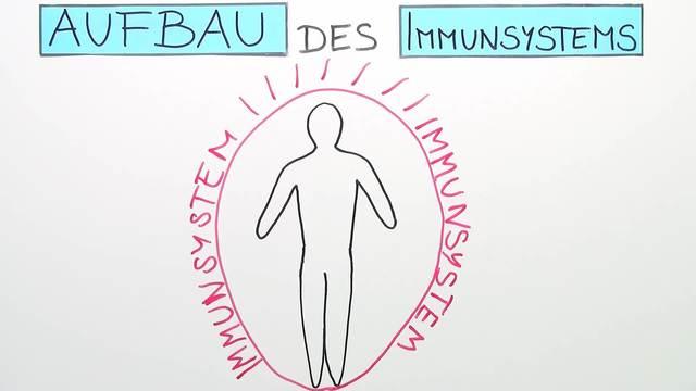 Immunsystem – unspezifische Abwehr