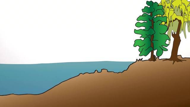 Pflanzen im und am See