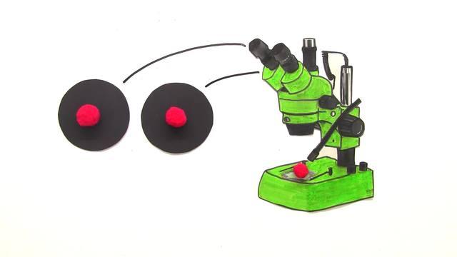 Mikroskop u2013 anfertigen von skizzen u2013 biologie online lernen