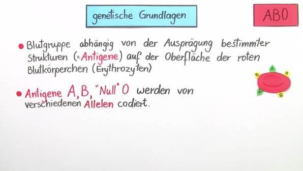 Vererbung der Blutgruppen AB0 und Rhesusfaktor